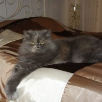Длиноногая красотка Китти... :: Galina Dzubina