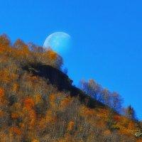 осенний день, луна и одинокая ель :: M Marikfoto