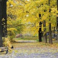 Осенний блюз поёт моя душа... :: Валентина Колова