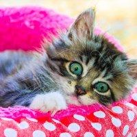 Бог сотворил кошку для того, чтобы у человека был тигр, которого можно погладить. :: Наталья Александрова