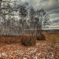 Первые заморозки :: Николай Привалов