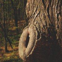 Старое Древо... :: Павел Зюзин