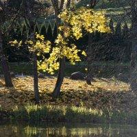 Краски октября :: Kliwo