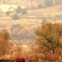 Рыжая лошадь на рыжей траве. :: Копыткина Юлия