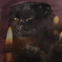 А я действительно похож на галлюцинацию. Обратите внимание на мой профиль в лунном свете. :: Tatiana Markova