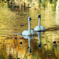В золотой воде ..... :: Alexander Andronik