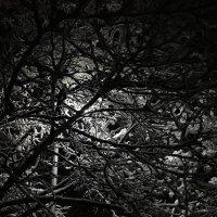 Деревья зимой 2 :: Сергей Щеглов