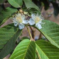 на Бали цветут сады :: Александр