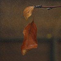 Настроение осень... :: Вика К.