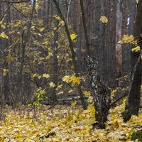 в лесу 3 :: Геннадий Свистов