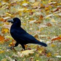 Пешком по осенним листьям... :: Тамара (st.tamara)