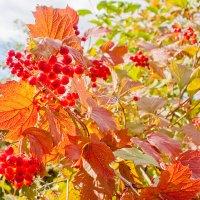 золотая осень :: Андрей Арафалов