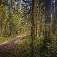 На лесной дорожке :: Александр Лебедев