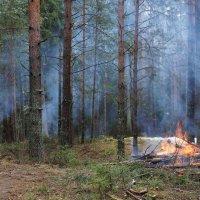 Лес чистят :: Исаков Александр