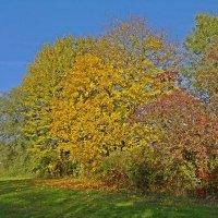 Осенний костер :: Galina Dzubina