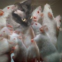 ......и мышки белые в очах...... :: Tatiana Markova