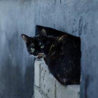 Бездомная :: Oxana Schneider