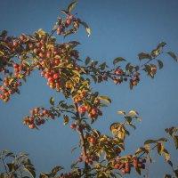 Угощение для птичек :: Aнна Зарубина