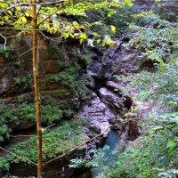 Гуамское ущелье. :: cfysx