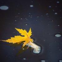 Не все листья умеют плавать... :: Ирина Приходько