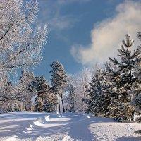 Снежные дорожки :: Елена ))