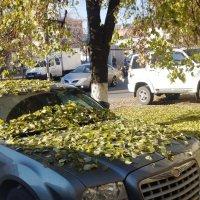 Осень-осень :: Serg