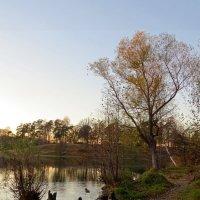 Осень на озере :: Вера Щукина