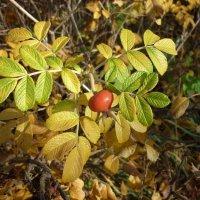 красный, желтый, зеленый))) :: Oxi --