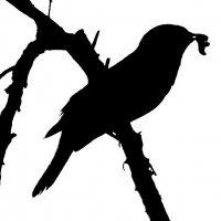 Птичка на ветке. :: Наталья