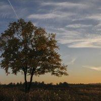 Осенний вечер... Окрестности Лунского озера. :: Фёдор Куракин