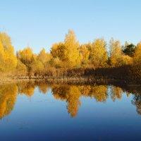 золотая осень :: владимир володенок