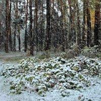 Земли касаясь таяли снежинки... :: Лесо-Вед (Баранов)