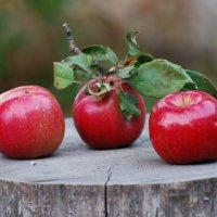 яблочки :: Iryna K