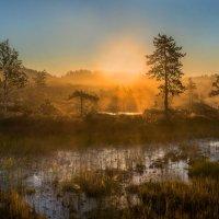 Туманное утро на болоте. :: Фёдор. Лашков