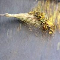 Подметание листвы :: Асылбек Айманов