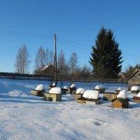 Ожидая весну :: Николай Котко