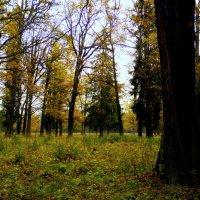 Осень в урочище. :: Елена