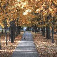 Осень в парке :: Михаил Онипенко