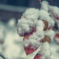Снег :: Игорь Чистяков