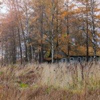 Осень :: Людмила Волдыкова