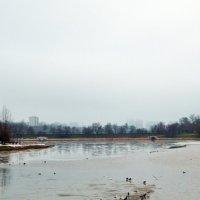 Река Городня в Царицыно :: Владимир Болдырев