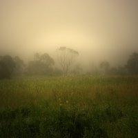 Лето. Утро. Туман :: Дмитрий
