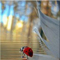 Я на перышке сижу,на водичку я гляжу... :: Лидия (naum.lidiya)