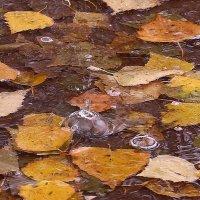 Плачет осень :: Татьяна Ломтева