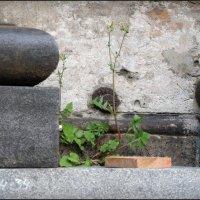 """""""и на камнях растут..."""" :: sv.kaschuk"""