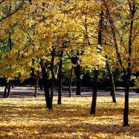 Сквер в золотой листве :: Татьяна Пальчикова