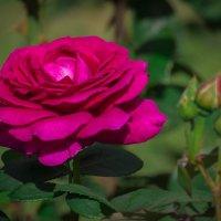 Необычный цвет :: Андрей Нибылица
