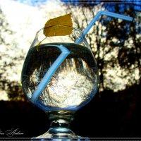 Напиток ноября :: °•●Елена●•° Аникина♀