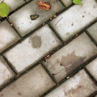 След мягкой лапы осени... :: Илья Строганов