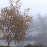Туманный Альбион: Туманная осень :: Дмитрий Сорокин